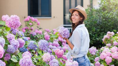 Így neveld a hortenziát: a látványos virágú cserje minden kertbe illik, és nemessé teszi a környezetét