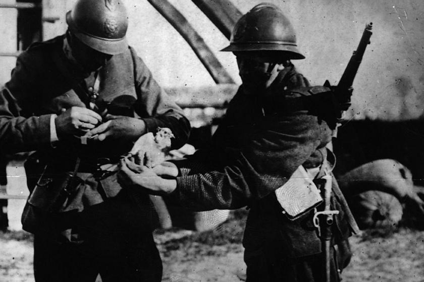 Belga katonák és galambok 1915-ben.