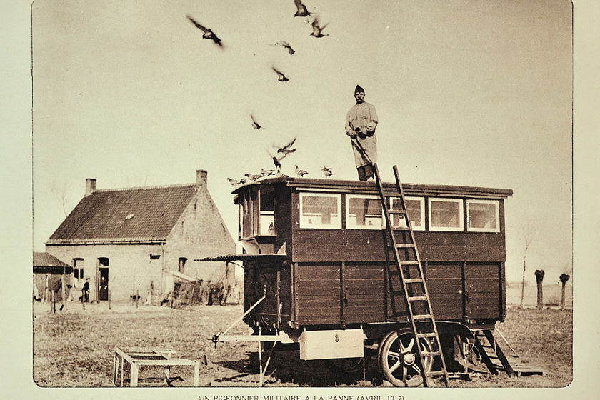 Galambdús De Panne-ban az I. világháború idején.