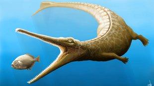 A Gerecse tengeri krokodilja