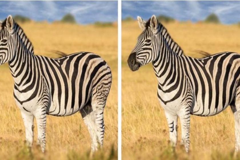 Megtalálod a különbségeket a képen? Tornáztasd meg játékos módon a szemed