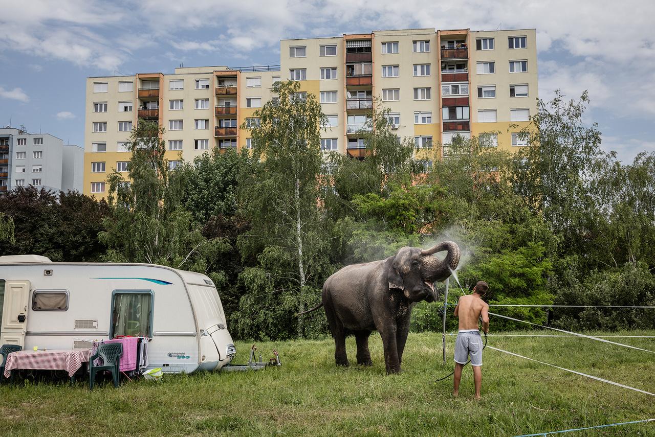Baño de elefantes, 2016, Budaörs