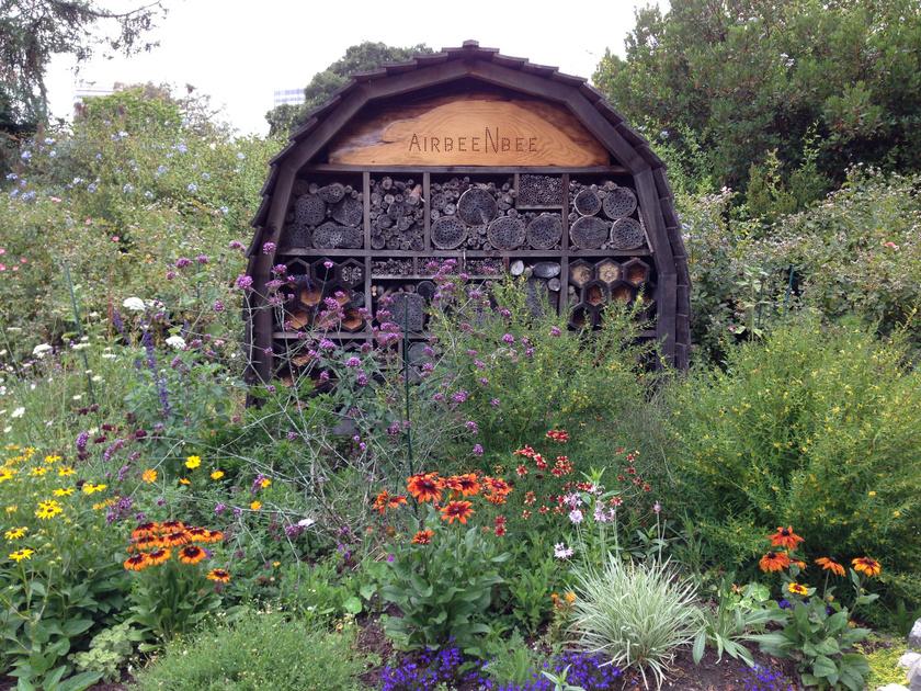 oakland flickr méhlegelő