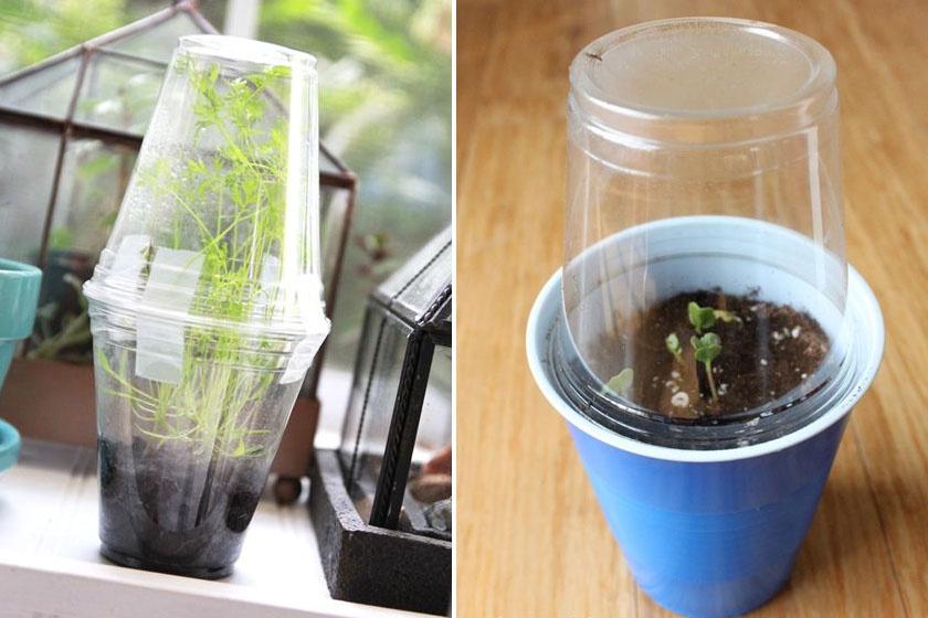 Készíts parányi üvegházat a palántáknak műanyag poharakból! Csak össze kell őket celluxozni egy-egy ponton, vagy egyszerűen összenyomni azokat.