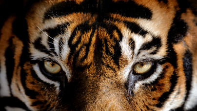 Tudod, hogy melyik a világ leghalálosabb állata? És a legveszélyeztetettebb? Kvízünkből kiderül!