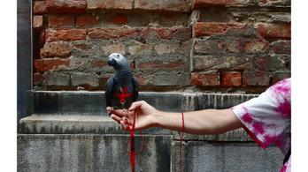 Képek pandémia alatt vagy helyett – XXI. századi zsánerfotók a Kiscelliben