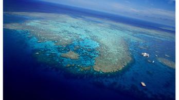 Dubajban félmillió négyzetméteres korallzátonyt növesztenek