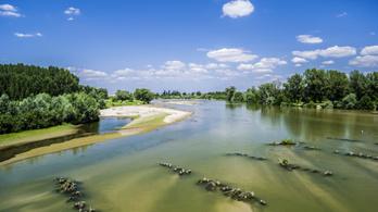 Pusztulnak a halak a Duna egyik mellékfolyóján