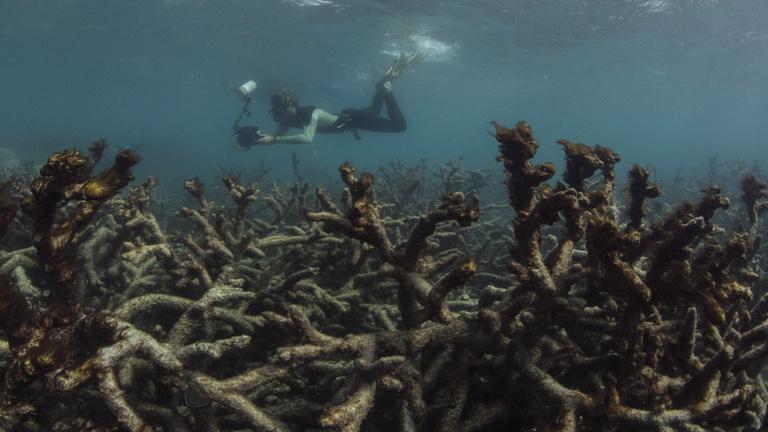 Az első billenőpont a korallszigetek kipusztulása lesz