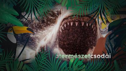 Miért esik több férfi a cápatámadások áldozatául, mint nő?