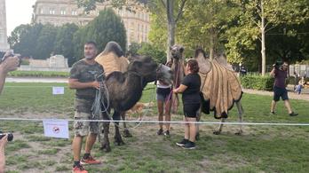 Tevékkel demonstráltak Budapest belvárosában a környezetvédők