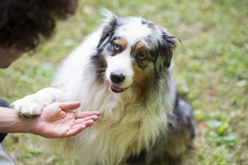 kutya mancs 1
