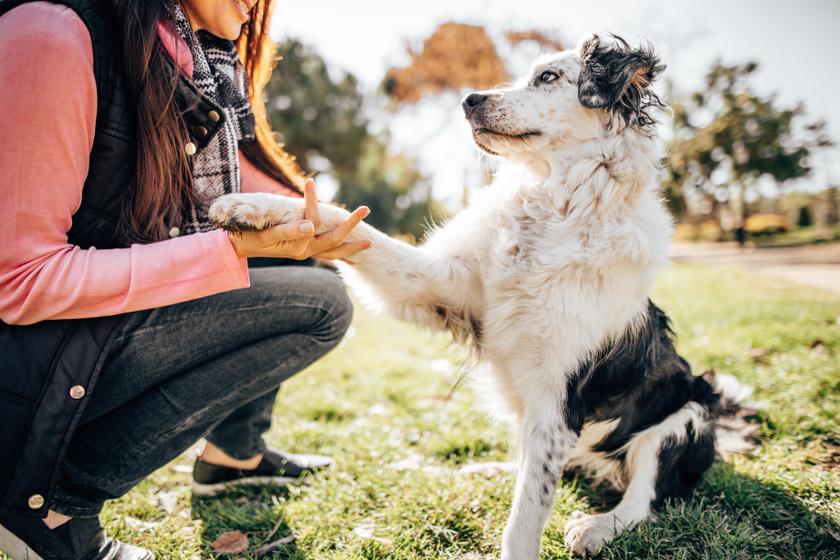kutya mancs 2