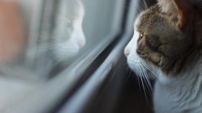 Miért szeretnek a macskák kibámulni az ablakon?