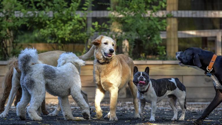 Covid-kutyák: a szeparációs stressz ebek százait érinti