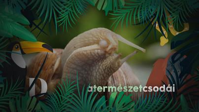 Azt hitted, bonyolult a szexuális életed? Mit szóljanak a csigák?