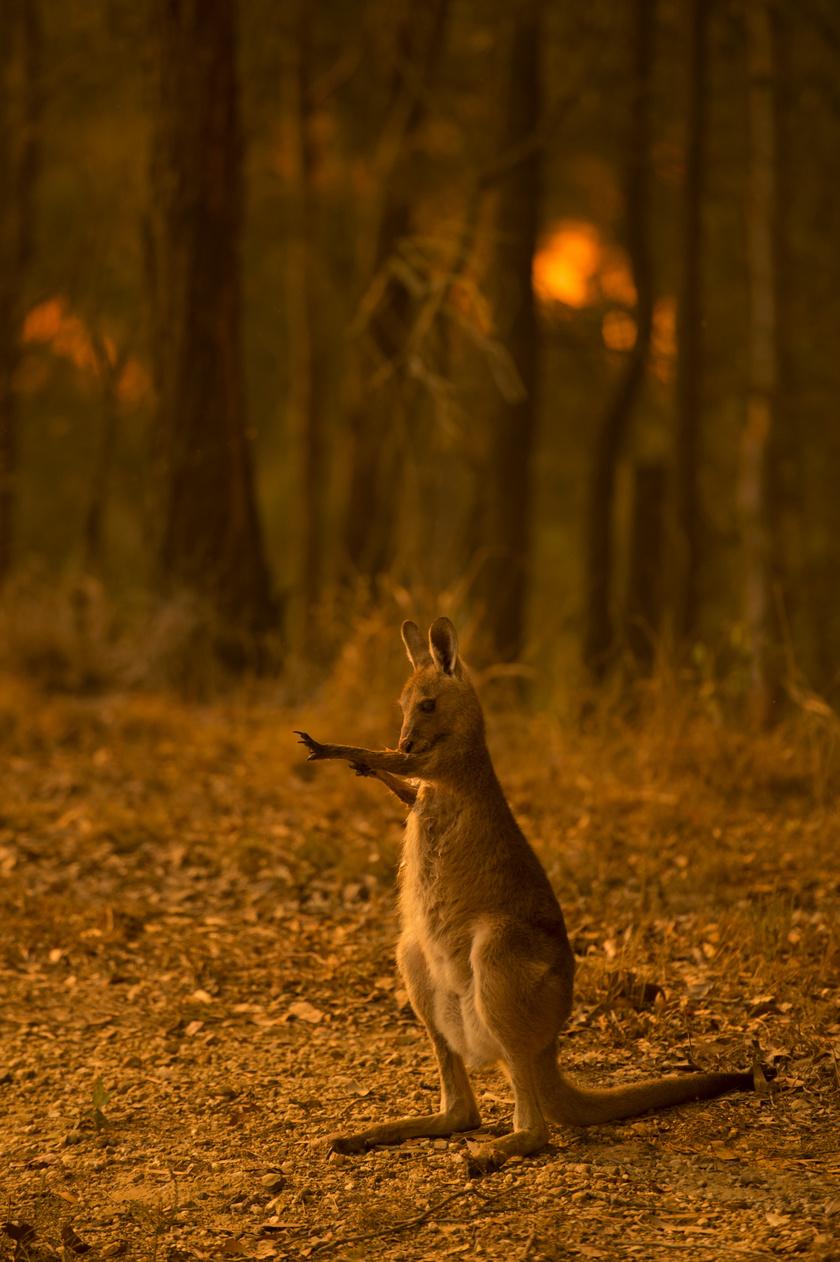 ausztrália-tűz-klíma1