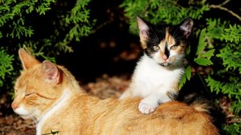 Gazdikereső kutyákat és macskákat regisztrált Tinderre egy állatmenhely