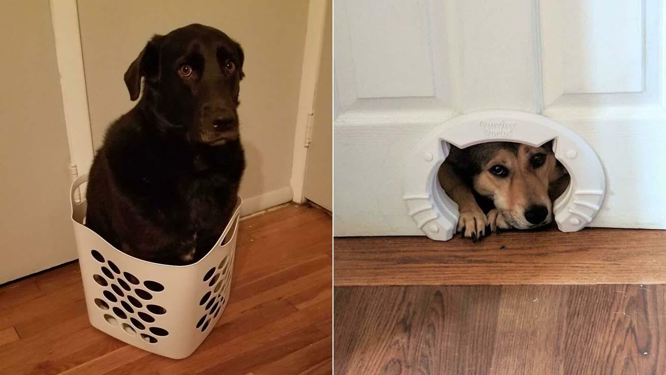 kutyák-macskaként-borító