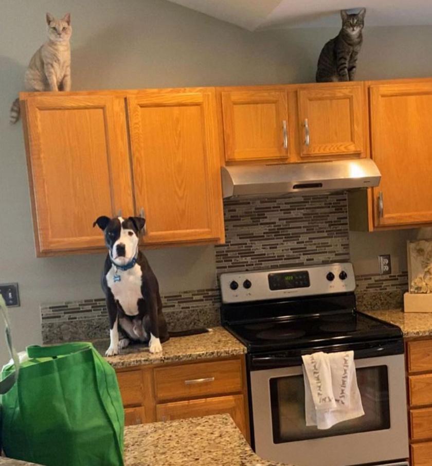Így jár az, aki macskákkal nő fel: elkezd úgy viselkedni, mint ők.