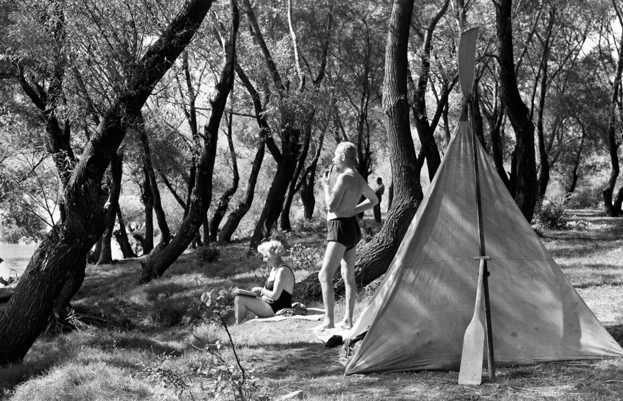 A Szentendrei-sziget érdekes alakú fái között tölti szabadidejét egy kiránduló család a kora őszi napfényben 1956. szeptember 11-én