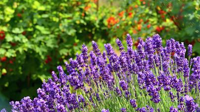 Könnyen nevelhető növények, melyeknek ott a helyük a kertedben