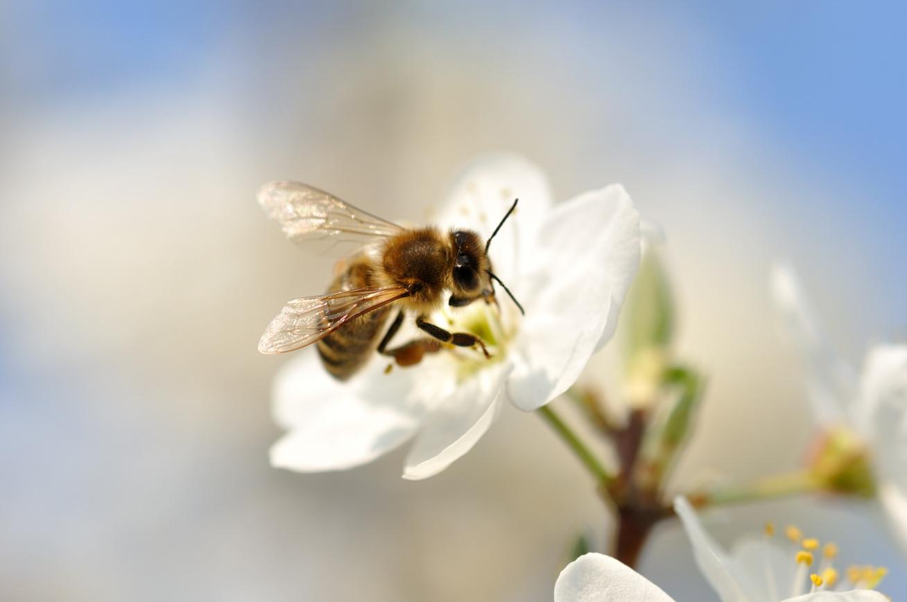 méh-méz2