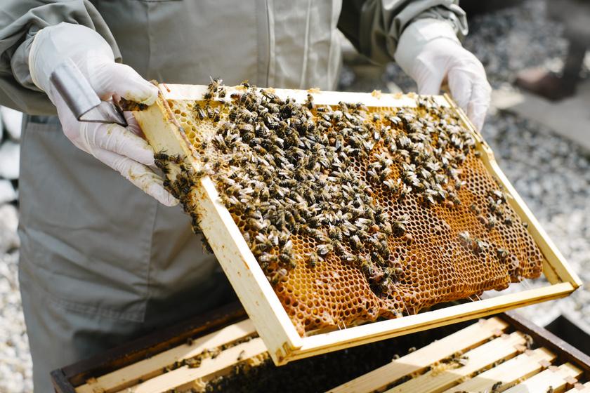 méh-méz1