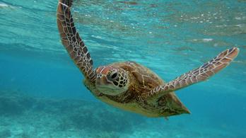 Miért élnek olyan sokáig a teknősök?
