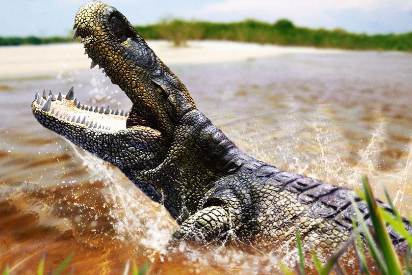 Így nézett ki a Purussaurus.