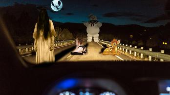 Elalvás előtt jönnek az úton ugráló állatok