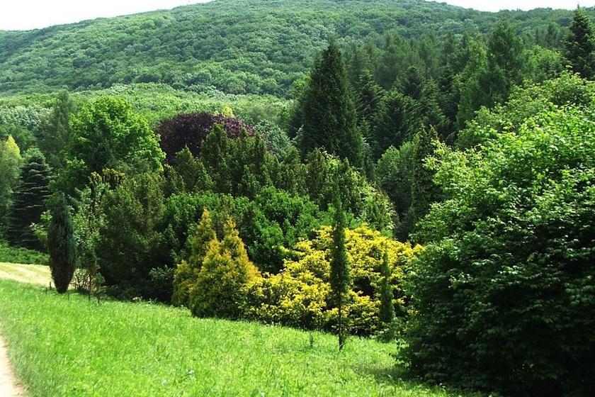 A Gerecse mesebeli helyszínén, Tatától néhány kilométerre, a Bocsájtó-völgyben fekszik az Agostyáni Arborétum. Az 1900-as évek elején Esterházy Móric fedezte fel a különleges klímájú, a melegben is hűs és szép környéket, az ő kezdeményezésére indult meg a fák, zömében tölgyek és vörösfenyők telepítése. Ma már sokféle különleges növénynek ad otthont az arborétum.