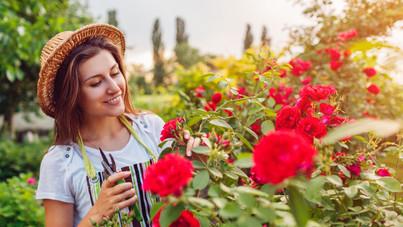Így nevelj gyönyörű rózsákat a kertedben: tippek a kertészmérnöktől