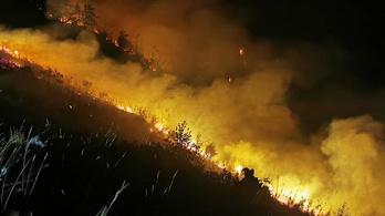 150 hektáron égett a fenyőerdő Bosznia-Hercegovinában