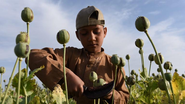 A tálibokon múlik Európa drogellátása