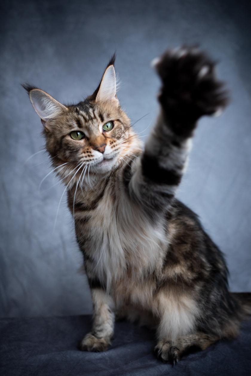 macska pofoz 1