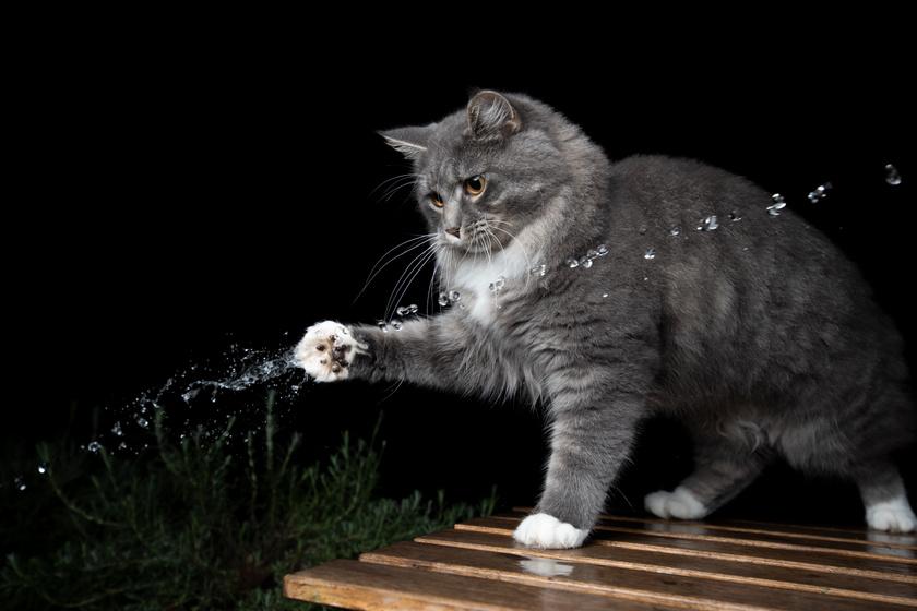 macska pofoz 2