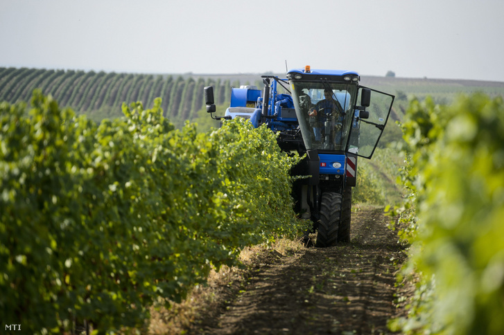 Szüretelőgép egy szőlőültetvényen a Heves megyei Andornaktálya közelében 2017. szeptember 11-én