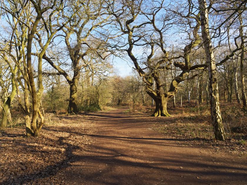 sherwood erdő fák