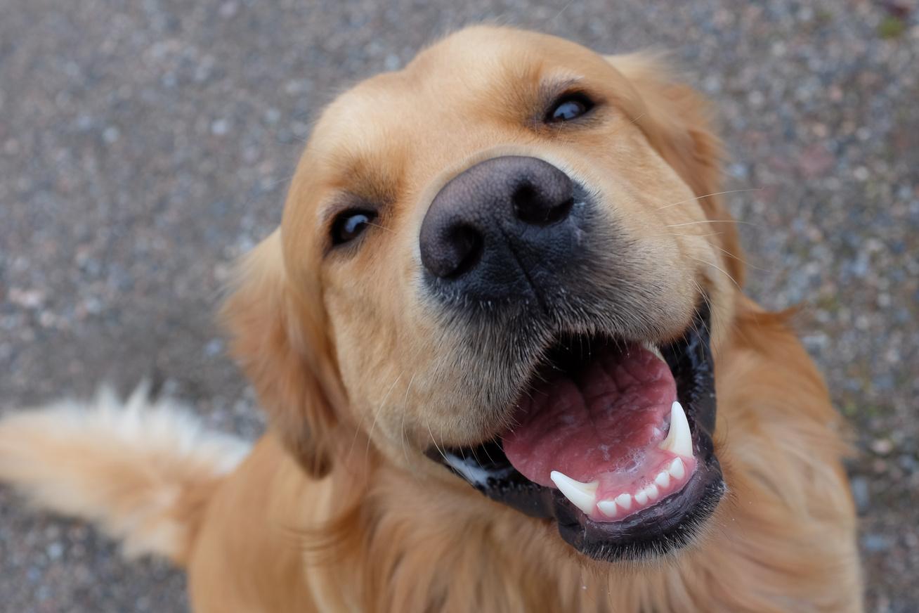 kutyák-élete1