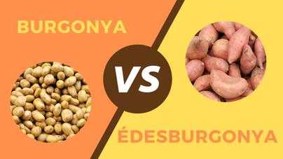 Mennyivel egészségesebb az édesburgonya a simánál? Egészségesebb egyáltalán?