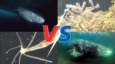 Melyik állat él a legtovább? A 190 éves teknős a kanyarban sincs a győzteshez képest