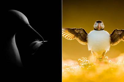 madár-fotók-borító