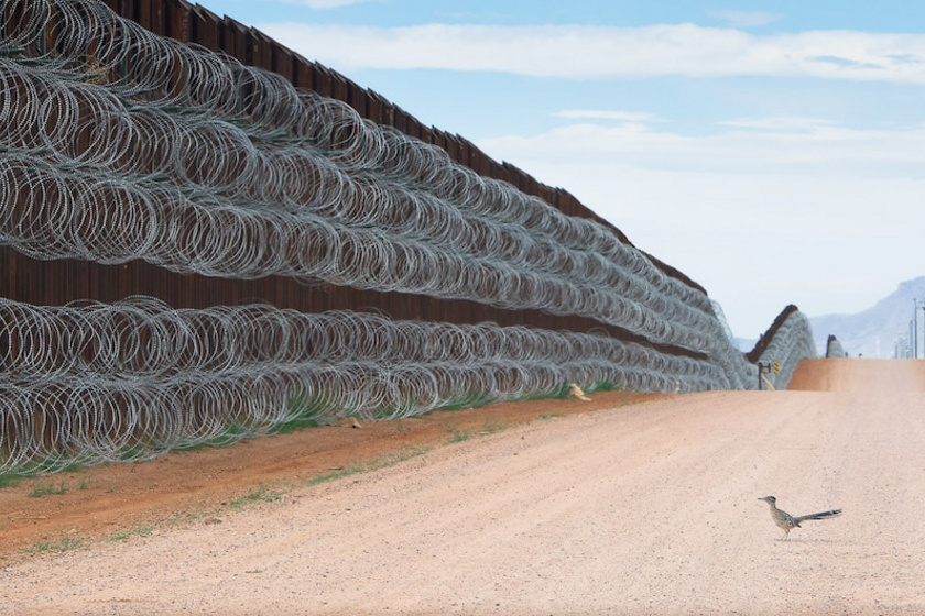 Az első helyet a mexikói Alejandro Prieto nyerte el, aki bemutatja, az élővilág számára milyen zavarodottságot okoz az USA és Mexikó között húzódó 3000 km-es határszakasz, ami nemcsak fizikailag blokkolja az élővilág mozgását, hanem elpusztítja és lecsökkenti az élőhelyeket is.