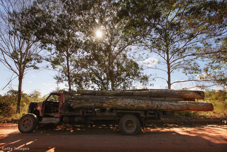 Rönköket szállító teherautó az Amazonas esőerdőben 2012. június 10-én