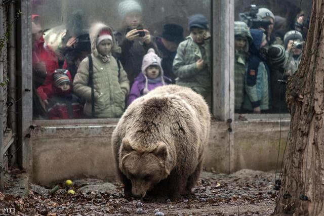 Látogatók lesik a medve árnyékát