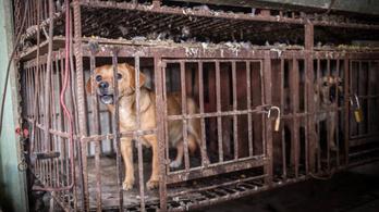 Állattartás: kegyetlen harc a ketrecek mellett és ellen