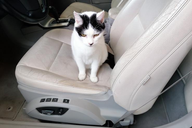 A vezetőülés motoros és memóriás, lent az üvet pedig egy kis fül tartja – innen lehet kiakasztani, hogy ne tekeredjen a hátsó utas lábára. (Lepke cica már tudja, hogy nem kapja meg a kulcsot, azért morcos)