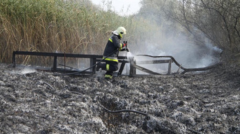 Több hektáron lángolt a nádas a Velencei-tónál