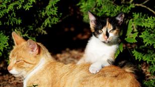 A macskák érzelemingadozása olyan, mint egy szinuszgörbe